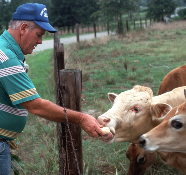 Jerry Brown feeding his cows, Hamilton, Alabama, ca. late 1980s, photograph by Joey Brackner, courtesy Alabama State Council on the Arts