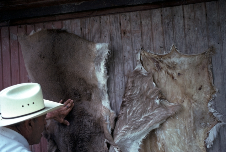 Thomas Edison 'Brownie' Ford looking at animal hides he is stretching and tanning for making chair seats, Hebert, Louisiana, 1990, photograph by Alan Govenar