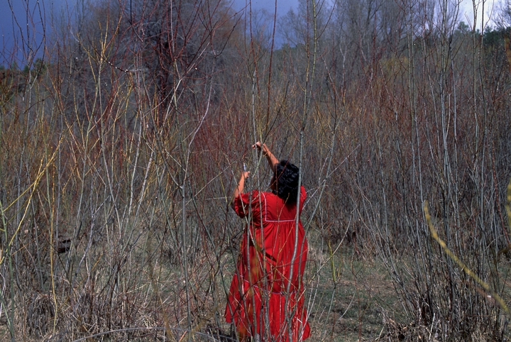 Evalena Henry collecting willow sticks, Diamond Creek, White Mountains, Arizona, March 1993, courtesy National Endowment for the Arts