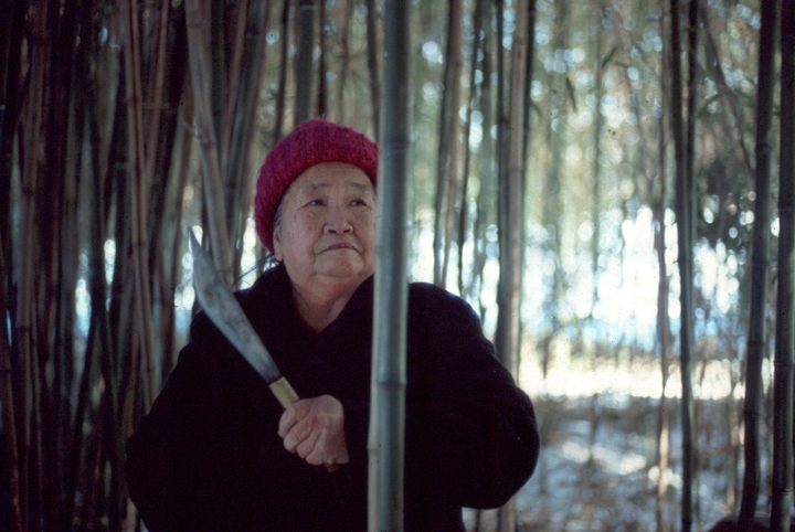 Yang Fang Nhu gathers bamboo to make the comb for her loom. Blithewold Gardens, Bristol, Rhode Island, 1986, photograph by Winifred Lambrecht, courtesy Rhode Island State Council on the Arts