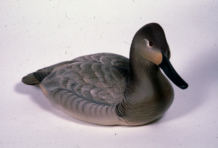 Decorative canvasback hen decoy by Harry V. Shourds, courtesy National Endowment for the Arts