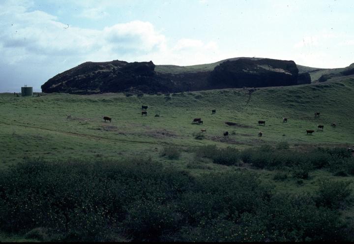 Ranch land near Clyde 'Kindy' Sproat's home, Kapa'au, Hawaii, 1996, photograph by Alan Govenar
