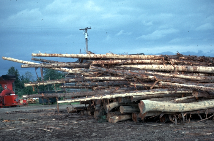 Lumber yard in Smyrna Mills, Maine, where Simon St. Pierre worked, 1990, photograph by Alan Govenar