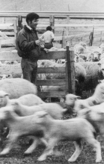 Martin Goicoechea counting lambs at the Magagna Bros. Ranch, Sweetwater County, Wyoming, October 1972, courtesy Basque Poets